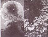 jamur disayang dan dibenci